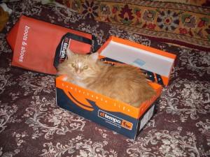 почему кот и кошка залезают в коробки