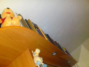 фото летучей мыши на шкафу